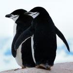 antarctica43