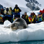 leopard seal and friends - near Pleneau Island