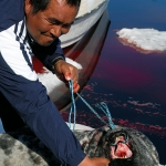 Greenlandic life - Tasiilaq