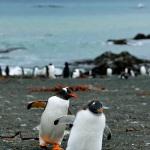 subantarcticislands15
